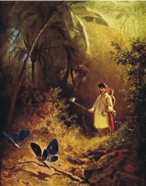 Карл Шпицвег: Ловец бабочек